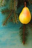 Bożenarodzeniowych metamorfizacj owocowy obwieszenie na gałąź Fotografia Royalty Free