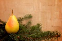 Bożenarodzeniowych metamorfizacj owocowy obwieszenie na gałąź Fotografia Stock