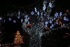 bożonarodzeniowe światła fotografia royalty free