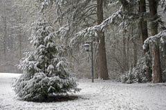 bożonarodzeniowe światła drzewo Obrazy Stock