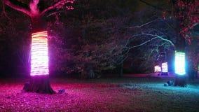 Bożonarodzeniowe światła w Królewskich Kew ogródach, Londyn, UK zdjęcie wideo