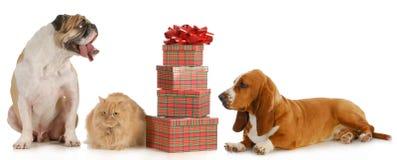 Bożych Narodzeń zwierzęta domowe obrazy royalty free