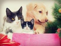 Bożych Narodzeń zwierzęta domowe Fotografia Stock