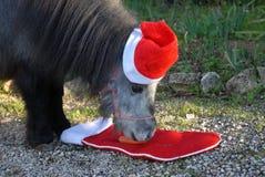 Bożych Narodzeń zwierzęta domowe Miniaturowy koń jest ubranym Santa kapelusz fotografia stock