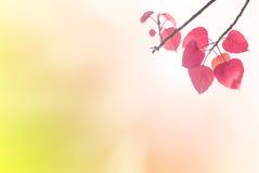Bo выходит пинк весной или красивые листья в запачканную природу Стоковое Изображение RF