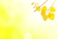 Bo выходят листовые золота весной или красивое в запачканную природу o Стоковые Фотографии RF