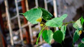 BO-Baum Stockbild