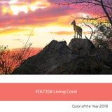 Bo Coral Color av året, Steenbok på solnedgången royaltyfri foto