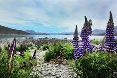Bo den härliga drömmen i Nya Zeeland Royaltyfri Foto