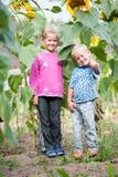 Bo den lyckliga barnsyskongruppen i busksnåren av solrosen i trädgården av lantgården royaltyfri fotografi