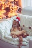 Boże Narodzenia