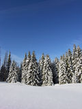 boże narodzenia lasowi Zdjęcie Stock