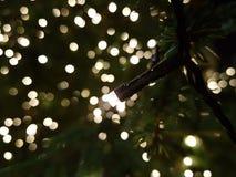 Boże Narodzenia makro- fotografia royalty free