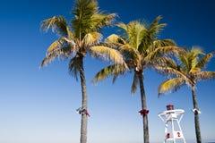 boże narodzenia palmowi Zdjęcia Royalty Free