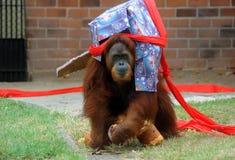 Boże Narodzenia przy zoo Fotografia Stock