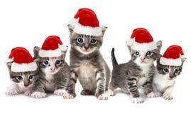 Boże Narodzenie figlarki Jest ubranym Red Hat na bielu Fotografia Stock
