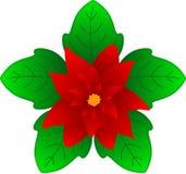 boże narodzenie kwiat Zdjęcie Stock