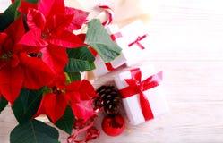 Boże Narodzenie kwiat - poinsecja i prezenty zdjęcia stock