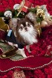 boże narodzenie pies Zdjęcie Royalty Free