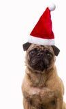Boże Narodzenie Pies Zdjęcie Stock