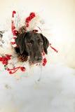 Boże Narodzenie pies Zdjęcia Stock