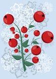 Bożenarodzeniowa ilustracja z rowan jagodami Obrazy Royalty Free