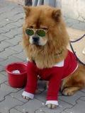 Bożenarodzeniowa psina Obrazy Stock