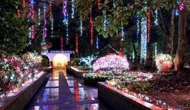 Bożenarodzeniowe iluminacje w parku Obrazy Royalty Free