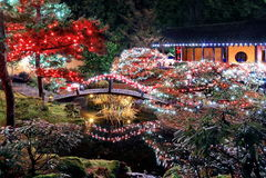 Bożenarodzeniowe iluminacje w parku Zdjęcia Royalty Free