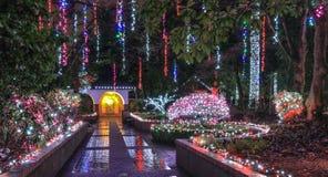 Bożenarodzeniowe iluminacje w parku Zdjęcia Stock