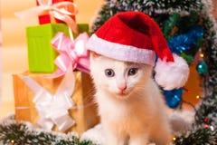 Bożenarodzeniowy kot w czerwonej Santa ` s kapeluszowej pobliskiej choince Obrazy Royalty Free