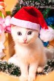 Bożenarodzeniowy kot w czerwonej Santa ` s kapeluszowej pobliskiej choince Obraz Stock