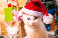 Bożenarodzeniowy kot w czerwonej Santa ` s kapeluszowej pobliskiej choince Obrazy Stock