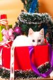 Bożenarodzeniowy kot w czerwonej Santa ` s kapeluszowej pobliskiej choince Zdjęcia Stock