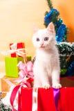 Bożenarodzeniowy kot w czerwonej Santa ` s kapeluszowej pobliskiej choince Fotografia Royalty Free