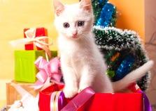 Bożenarodzeniowy kot w czerwonej Santa ` s kapeluszowej pobliskiej choince Zdjęcie Stock