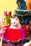 Bożenarodzeniowy kot w czerwonej Santa ` s kapeluszowej pobliskiej choince Fotografia Stock