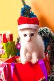 Bożenarodzeniowy kot w czerwonej Santa ` s kapeluszowej pobliskiej choince Zdjęcia Royalty Free
