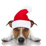 Bożenarodzeniowy Santa pies Obrazy Stock