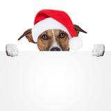 Bożenarodzeniowy sztandaru placeholder pies Obraz Royalty Free