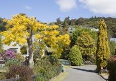 Bo i Nya Zeeland Arkivbild