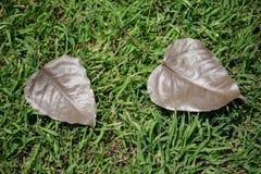 Bo leaf na trawie Obraz Stock