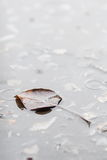 Bo leaf on surface water Stock Photos