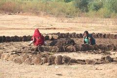 Bo med byn för ko för naturIndien natur som bor chattishgarh arkivfoton