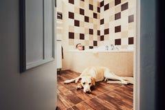 Bo med hunden arkivbild