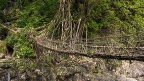 Bo rotar bron nära den Nongriat byn, Cherrapunjee, Meghalaya, Indien arkivbild