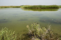 Bo Si Teng lake arkivbilder