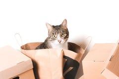 Bo?tes en carton le chat regarde hors du paquet de ouvrage photo libre de droits