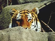 Bo zoolivet Fotografering för Bildbyråer