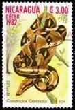 Boa Boa σφιγκτήρων σφιγκτήρας, ερπετά serie, circa 1982 στοκ φωτογραφία με δικαίωμα ελεύθερης χρήσης